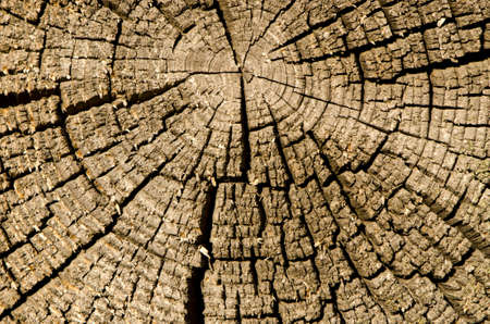 old and cracked wooden log background and texture Stock Photo - 13898880