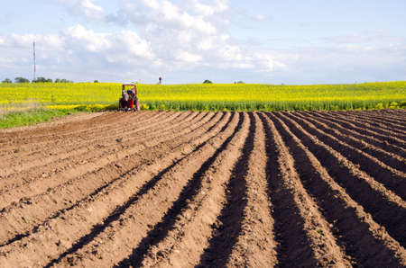 tillage: spring field with potato tillage and tractor