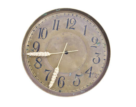 isolated on white harvest time clockdial and ears arrows photo