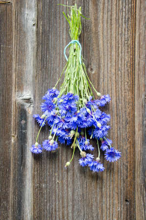 blue cornflower fresh bunch on old wooden wall Stock Photo - 14789385