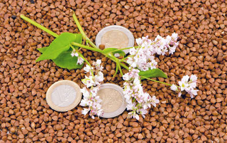 buckwheat seeds and blossoms with euro coins money Stock Photo - 14925588