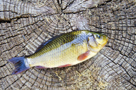 fresh fish crucian on old wooden background Stock Photo - 14925682