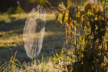 autumn morning dewy spider-web and sunrise sunlight photo