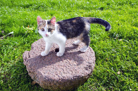 young cat on old millstone in garden photo