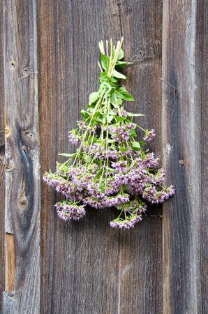 wild marjoram medical flowers bunch on old wooden house wall