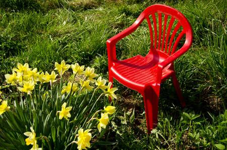 red children chair in garden on grass and spring narcissus Stok Fotoğraf - 15880233