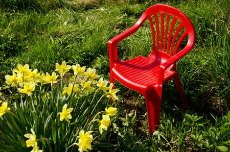 red children chair in garden on grass and spring narcissus