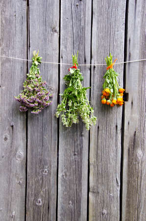 summer medical herbs calendula, wild marjoram and lemon-balm bunches on wooden wall