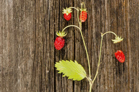 wild strawberry: wild strawberry on old wooden plank background Stock Photo