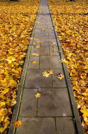 concrete pavement park path through autumn leaves