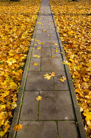 concrete pavement park path through autumn leaves