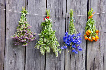 wooden aromatherapy: summer medical herbs bunches on old  wooden wall