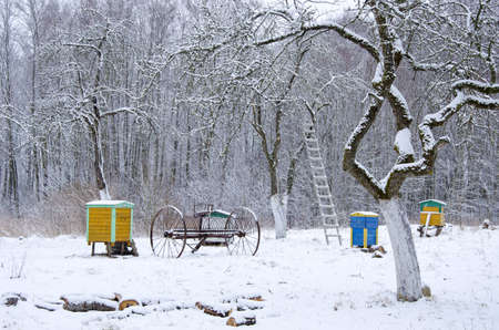 winter time snow in old rural garden Stock Photo