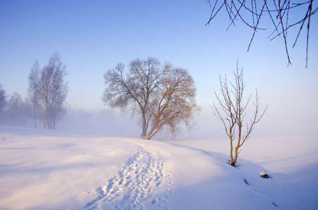beautiful winter morning landscape with fog Stock Photo - 18213326