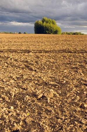 plowed: plowed farm field evening landscape