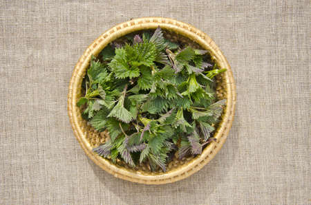 fresh spring time nettle sprouts in basket photo