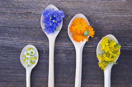 various fresh medical herbs bloosoms in wooden spoons on old wooden background.  Calendula, cornflower, tutsan and chamomile photo