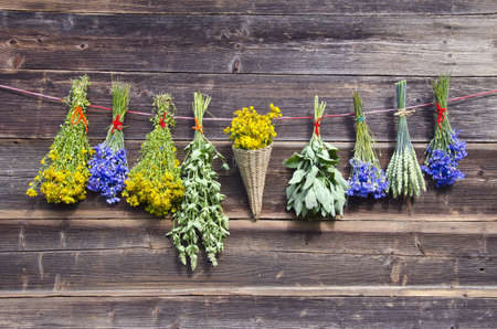many summer various medical herbs bunches on old wooden farm wall photo