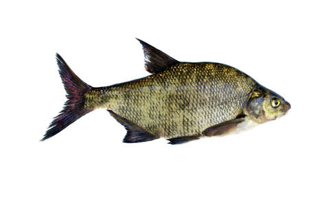 big fresh fish bream isolated on white background Stock Photo - 21206157