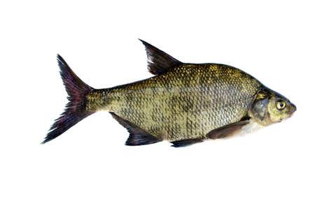 big fresh fish bream isolated on white background Stock Photo - 21206157