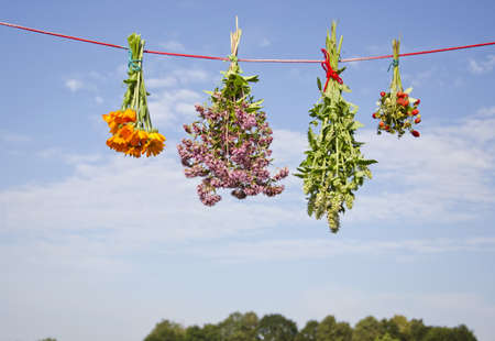 four medical herb flowers bunch on string and sky background