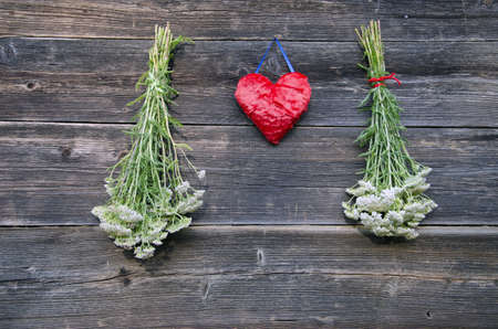 millefolium: red heart and medical plant Achillea millefolium yarrow common herb bunch on old wooden farm wall Stock Photo