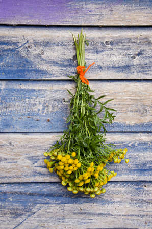 medical herb Common Tansy (Tanacetum vulgare) flower bunch on old wooden wall