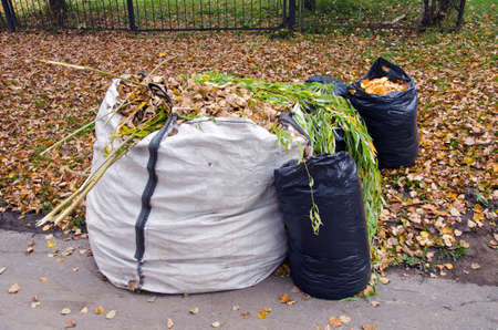 autumn time leaves in white and black plastic sacks