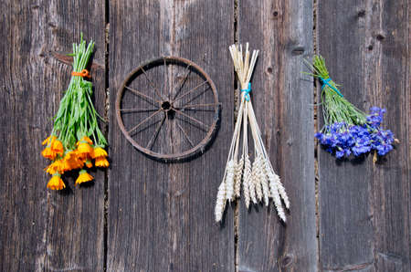 wheat and medical herbs bunch on old wooden wall. Harvest concept photo