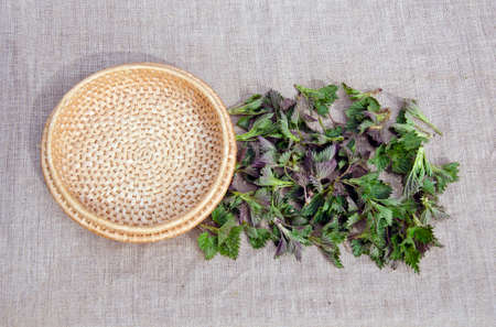 fresh spring medical neetle herb for salad on linen cloth and wooden plate photo