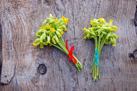 cowslip: two fresh Common Cowslip( Primula veris) medical flowers bunch on old wooden background