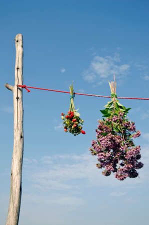 wild marjoram: oregano  and wild strawberry herbs bunch on red clothes string