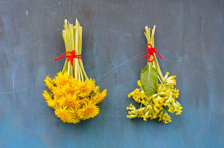 flower bunch: two spring medical healthy flower bunch on blue wall - cowslip and dandelion