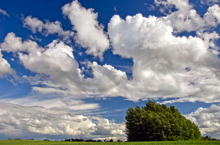 summer agriculture landscape with tree and beautiful clouds Stock Photo