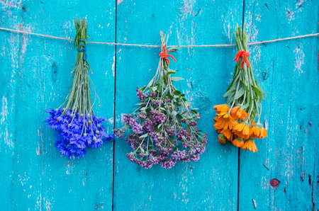 wild marjoram: three medical herb flowers colorful bunch on old green wooden wall. Calendula, cornflower and wild marjoram Stock Photo