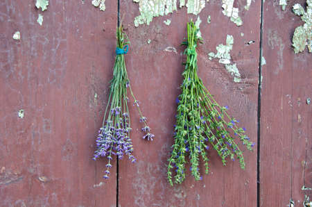 hyssop: fresh medical herbs lavender and hyssop (Hyssopus officinalis) on old wooden farm barn wall