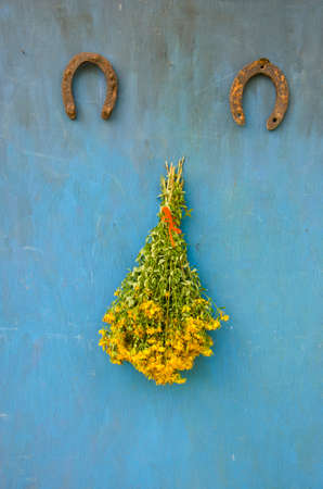 big bunch  fresh yellow medical flowers Hypericum st Johns wort ant two old rusty horseshoe on wall Stock Photo