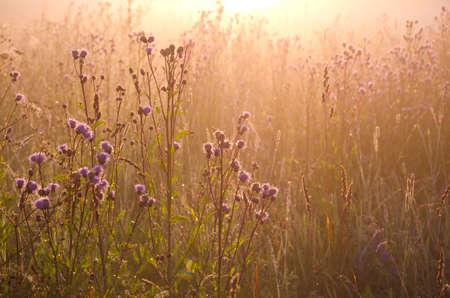 dewy beautiful summer morning grass and sunrise sunlight. Nature background Stockfoto