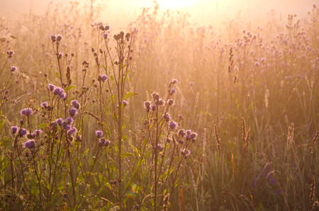 dewy beautiful summer morning grass and sunrise sunlight. Nature background Stock Photo