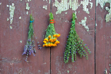 hyssop: medical herbs bunch on old wooden wall p marigold calendula, hyssop and lavender