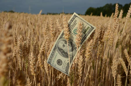 USA dollar banknote on wheat ears. Agriculture business concept Stok Fotoğraf