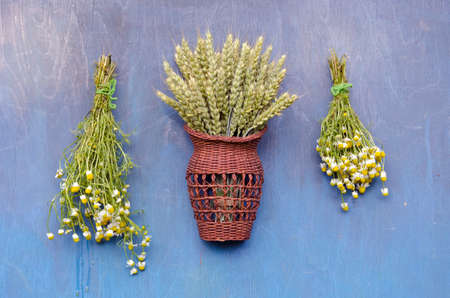 flower bunch: two chamomile medical flower bunch and wheats in wicker basket  on blue wooden wall