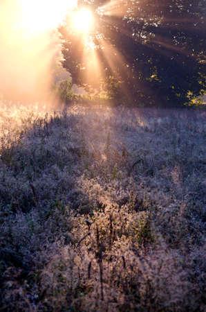 meadow  grass: hierba escarchada tiempo prado del oto�o y hermosa luz del amanecer