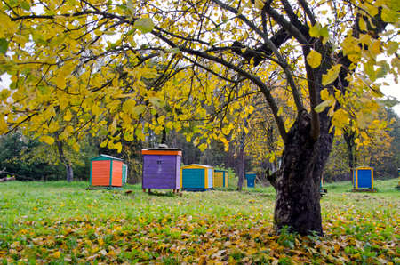 colorful beehive in autumn time fram ranch  garden photo