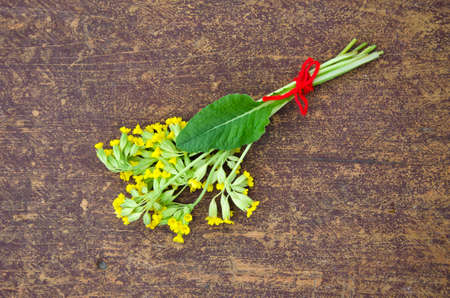 bunch of: yellow spring primrose cowslip medical flower bunch on wooden table