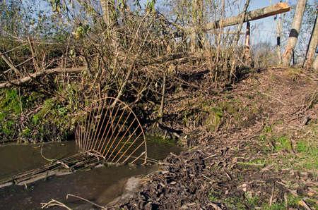 poacher: handmade poacher metal trap for european beaver in autumn river