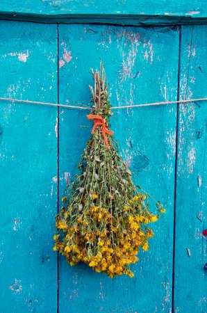 flower bunch: summer st Johns wort medical flower bunch on green wooden old farm wall