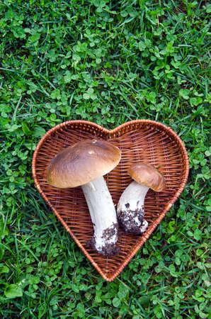 pair  mushroom fungi boletus in heart form basket on grass Stock Photo