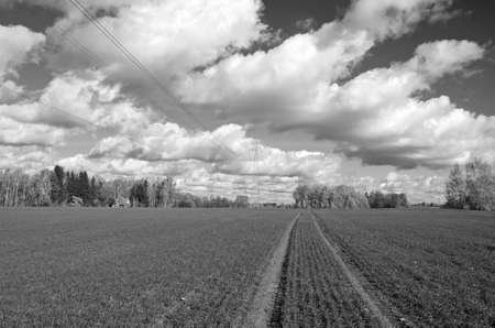 farm field: autumn farm field with green cereal crop sprouts and tractor traces. B&W agriculture landscape Stock Photo