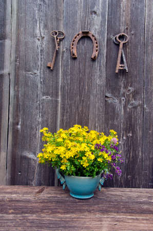 st Johns wort medical flowers in vase and antique rusty horseshoe with key on farm barn wall photo